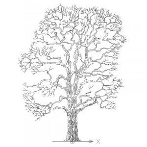 Cad Block of Complex tree in dwg