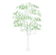 Cad Block of Tree elevation in dwg