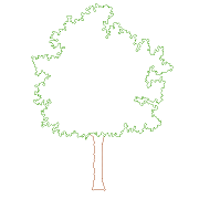 Cad Block of Tree Front View in dwg