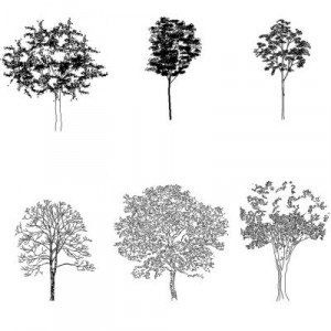 Cad Block of Complex trees in dwg