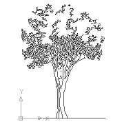 Cad Block of Cad Tree elevation in dwg