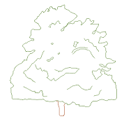 Cad Block of Maple elevation in dwg