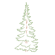 Cad Block of Fir, Pine in dwg