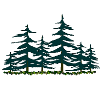 Cad Block of Pine and Fir woods in dwg