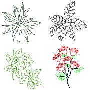 Cad Block of Houseplants, Roses in dwg