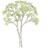 Cad Block of Complex tree elevation (2) in dwg