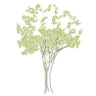 Cad Block of Complex tree elevation (7) in dwg