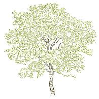 Cad Block of Complex tree elevation (8) in dwg