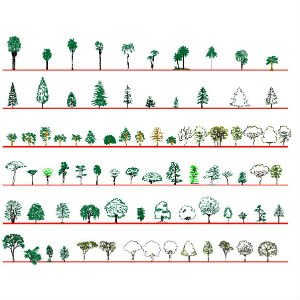 Cad Block of Complete set of 81 trees: front view in dwg